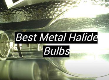 5 Best Metal Halide Bulbs